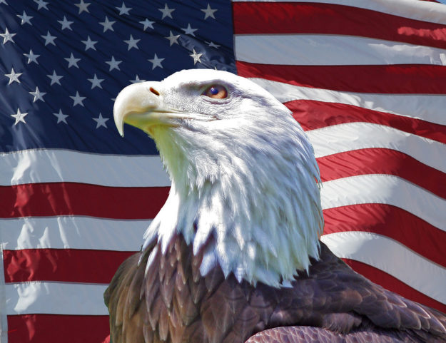 us_flag_patriotic_eagle_111459